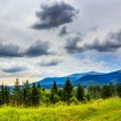 Coniferous forest on a steep mountain slope — ストック写真