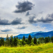 Coniferous forest on a steep mountain slope — Stock fotografie