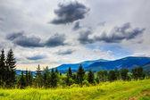 Jehličnatý les na strmém horském svahu — Stock fotografie