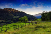 Conifer forest on a high mountain slope — Stock fotografie