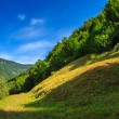 Forest on a steep mountain slope — Stock fotografie