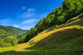 Forest on a steep mountain slope — Stockfoto