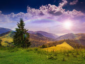 Forest on a steep mountain slope — Stock Photo
