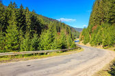 Mountain road near the forest — Stock fotografie