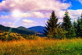 Meadow with in the mountains — Stock Photo