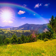 Mountain view from green meadow in summer — Stock Photo