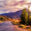 Mountain road by the forest cloudy morning — Stock Photo