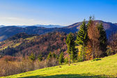 Coniferous forest on a mountain slope — Foto Stock