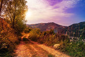 Mountain road near the forest with cloudy evening sky — Stock Photo