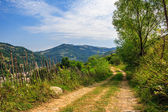 Mountain road near the forest with cloudy sky — Stok fotoğraf