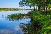 在森林附近的高山湖泊 — 图库照片