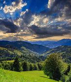Bir dağ yamacında iğne yapraklı orman — Stok fotoğraf