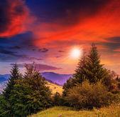 针叶林山的山坡上 — 图库照片