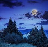 山の斜面上における針葉樹林 — ストック写真