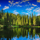 Mountain lake in coniferous forest — Stock fotografie