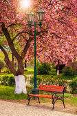 Pink blossomed sakura tree near the bench and lantern — Stock Photo