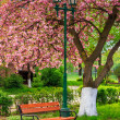 Pink blossomed sakura tree near the bench and lantern — Stock Photo