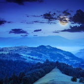 Coniferous forest on a steep mountain slope at night — Stock fotografie