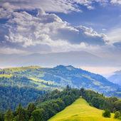 在陡峭的山坡上的针叶树森林 — 图库照片