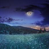 Pine trees near valley in mountains on hillside under night sky — Stock Photo