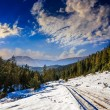 Snowy road to coniferous forest in mountains — Stock Photo