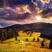 Coniferous forest on a steep mountain slope at sunset — Stock Photo