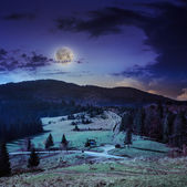 Coniferous forest on a steep mountain slope at night — Stock Photo