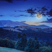 Coniferous forest on a steep mountain slope at night — Stockfoto