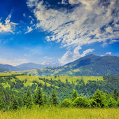 Pine trees near valley in mountains on hillside summer day — Stock Photo
