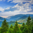 Pine trees near valley in mountains and autumn forest on hillsid — Stock Photo