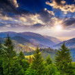 Pine trees near valley in mountains and forest on hillside under — Stock Photo
