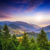 Pine trees near valley in mountains and summer forest on hillsid — Stock Photo