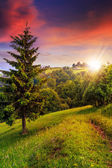 Forest glade in  shade of the trees at sunset — Stockfoto