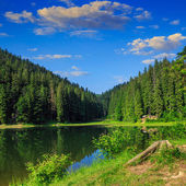 Pine forest and lake near the mountain early in the morning — Foto Stock