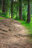 Morning walks in deep forest — Stockfoto