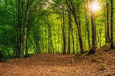 Forest glade in  shade of the trees with sun beam — Stock Photo