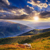 High wild plants at the mountain top at sunset — Stock Photo
