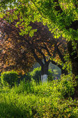Forest glade in sun light — Stock Photo