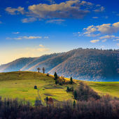 Pine trees near valley in mountains  on hillside under sky with  — Stock Photo