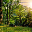 Forest glade in  shade of the trees at sunset — Stock Photo #45705503