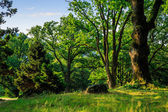Forest glade in  shade of the trees — Stock Photo