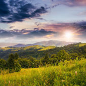 Coniferous forest on a  hillside valley at sunset — Foto de Stock