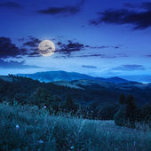 Coniferous forest on a  hillside valley at night — Foto de Stock