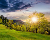 Forest on hillside meadow in mountain at sunset — Stock Photo