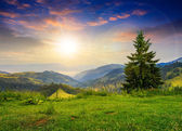 Pine tree on hillside under cloudy sunset sky — Stock Photo