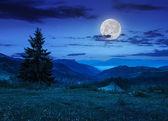 Pine tree on hillside under cloudy sky at night — Stock Photo