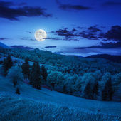 Coniferous forest on a  mountain slope at night — Stok fotoğraf