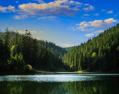 Pine forest and lake near the mountain early in the morning — Stock Photo