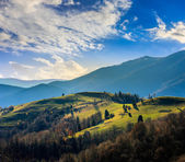 Pine trees near valley in mountains  on hillside — Stock Photo