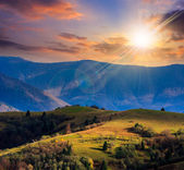 Pine trees near valley in mountains  on hillside at sunset — Stock Photo